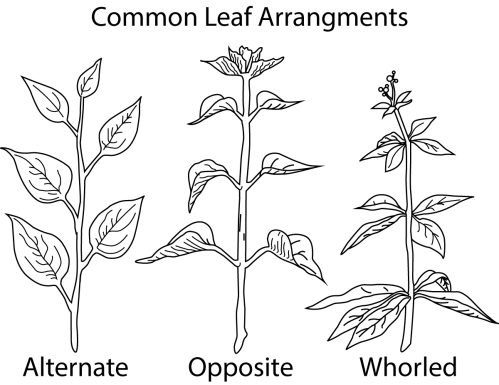small resolution of a picture of different types of leaf