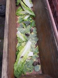 Les escargots (6)