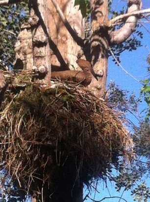 A big nest in the birds' area - Un gros nid dans la grande volière.