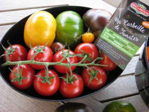 Tomates Prince de Bretagne IMG_6528