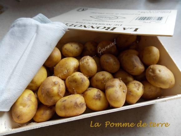 Pomme de terre DSCN3646_33645