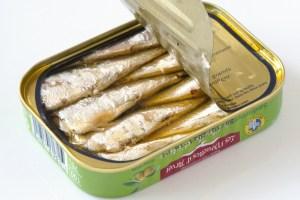 sardinette-gonidec