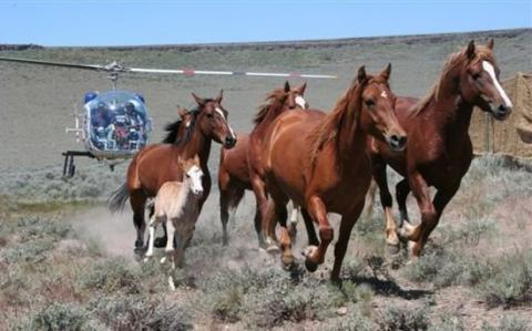 Wild Horse Program Mismanaged