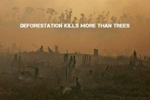 deforestation and endangered speciea
