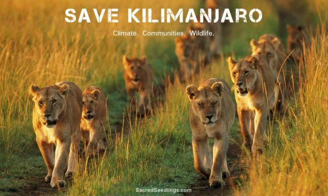 wildlife conservation campaign