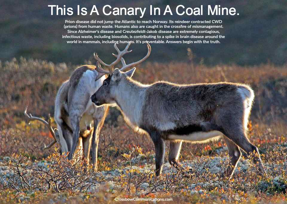 CWD Norway reindeer