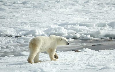 Arctic Wildlife Refuge Opened To Oil Drilling