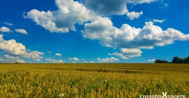 trail-running-kornfeld-blauer-himmel