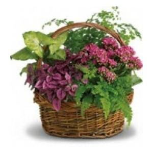 green plant dish garden flowers