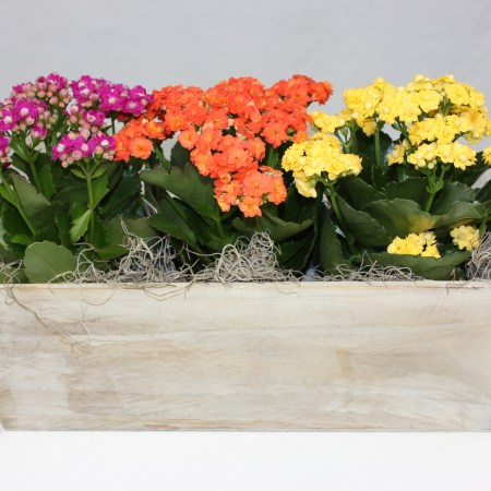 blooming planter