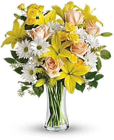 daisies adn sunbeams
