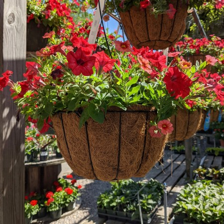 A coco-lined basket with a metal frame holds bright blooming annual flowers.