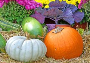 pumpkins, gourds, fall garden
