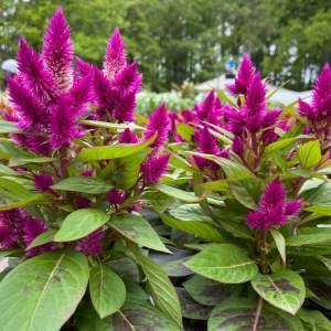 Variety vibrant flower colors