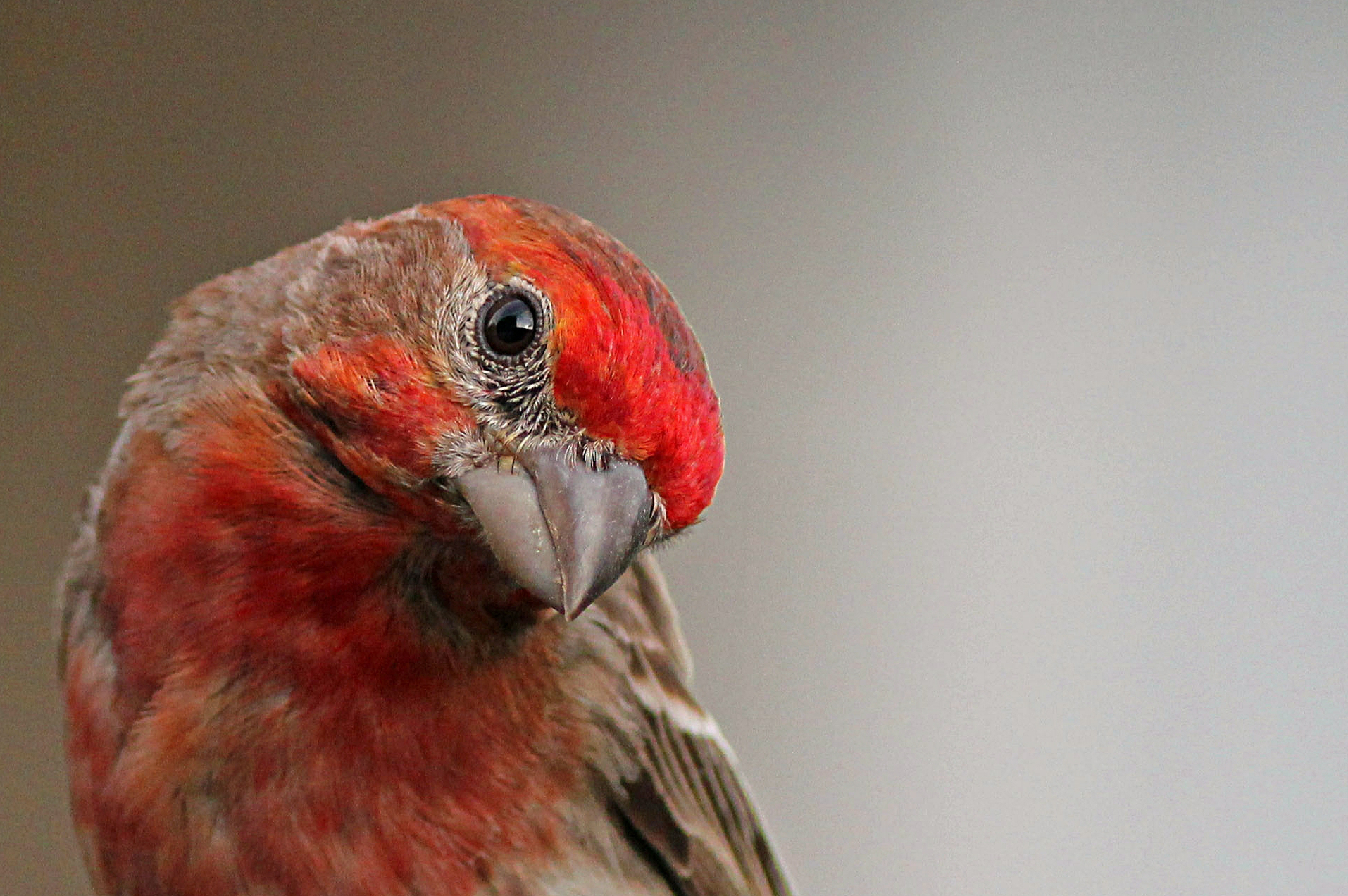 How much is that songbird at the feeder? Finch financials in ...