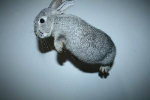 Flying bunny!
