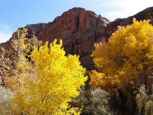 Fall leaves changing color in Canyon de Chelly illustrates how beautiful places inspire a higher perspective on life and you become more grounded, yet are free in spirit.