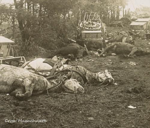 Duncan Blood, Journal for 1911: Tatzelwurm