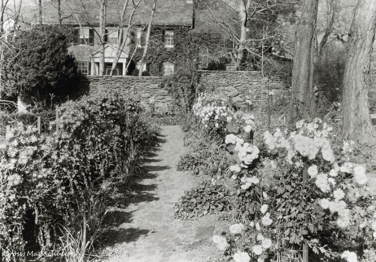 Blooming, 1923