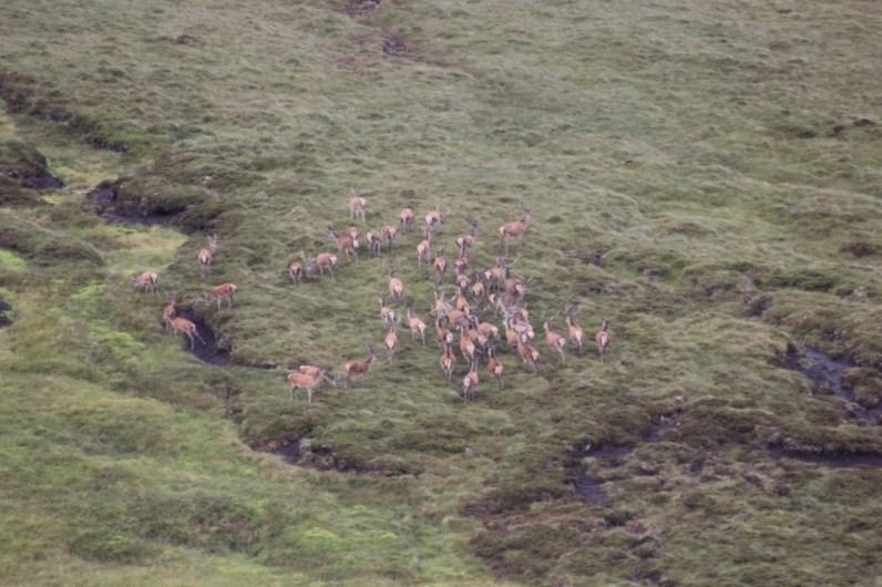 Deer stalking