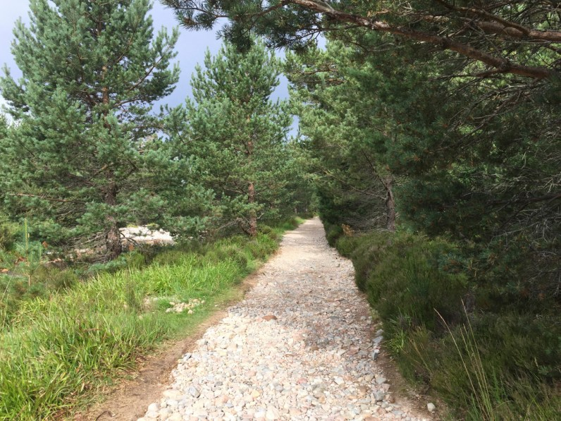 The path through Glen More woods to Castle Hill on our Lairig Ghru run
