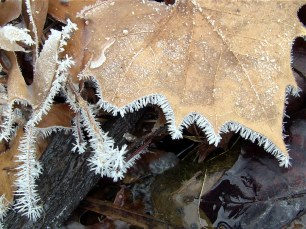 A sycamore leaf and twigs are outlined in frost crystals at the Sand Creek Falls.