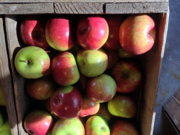 Each batch of cider contains a mixture of apple varieties—some tart, some sweet.
