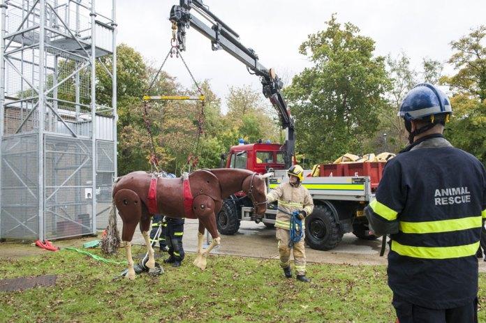 horse-rescue-sussex