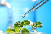 innovations des startup dans l'agriculture séduisent les fonds d'investissement