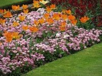 Low Maintenance Flower Bed Ideas to Enhance Your Landscape