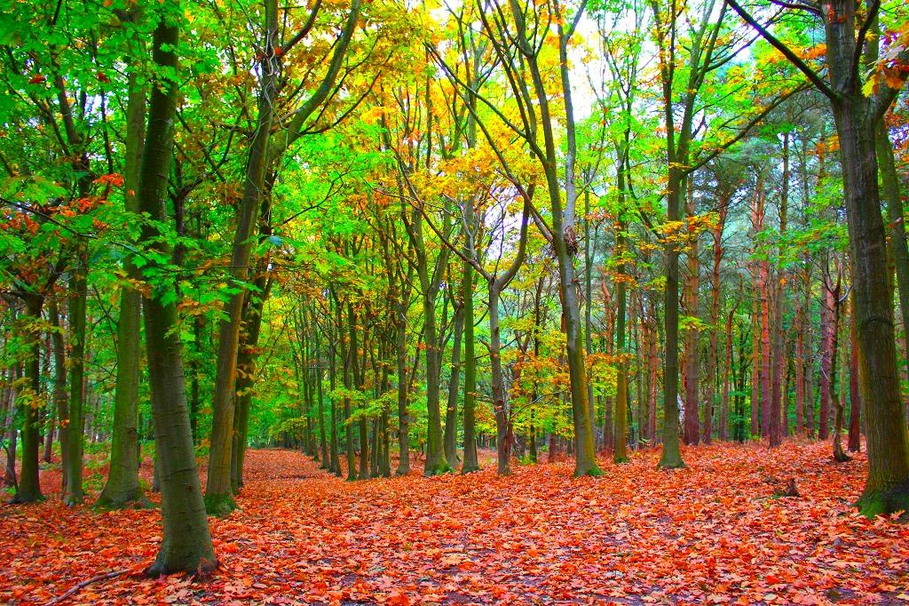 An Autumnal Haiku Poem