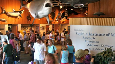 Visit VIMS for fascinating lectures from leading marine scientists or take the children to the family-friendly Discovery Labs to learn about blue crabs and shipwrecks.