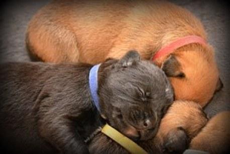 power-puppy-pile