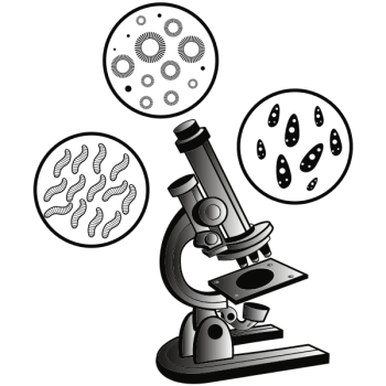 Adding Details to Viral Magic - Microscope