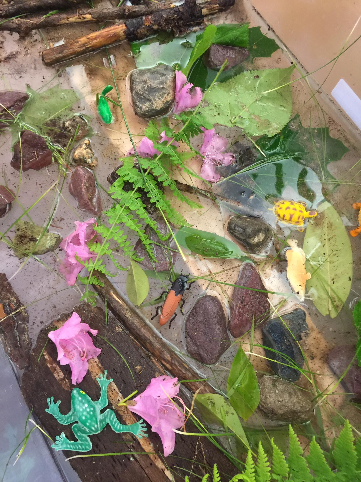 This Week in PreKindergarten #33: Metamorphosis est Completum Nostris