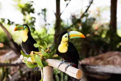 toucans_0391