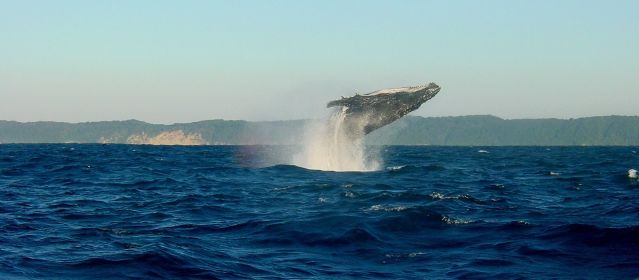 richards-bay-whales