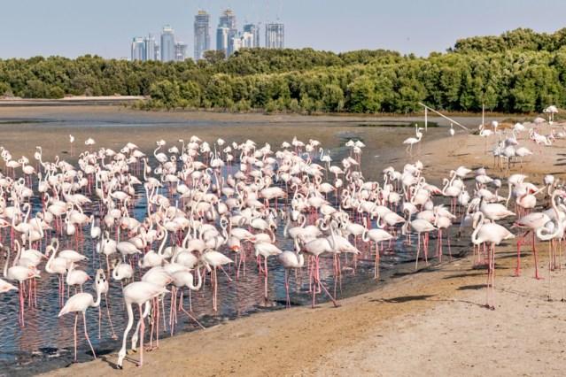 ras al khor wildlife sanctuary guide main