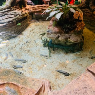 the flooded forest floor level of green planet immerses visitors in the rivers of the rainforest