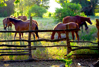 Horses Outdoors