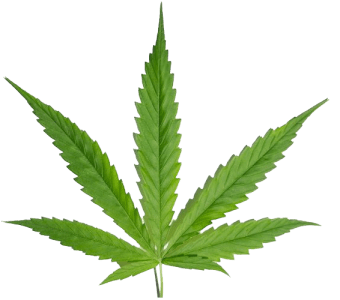 Kaya Marijuana