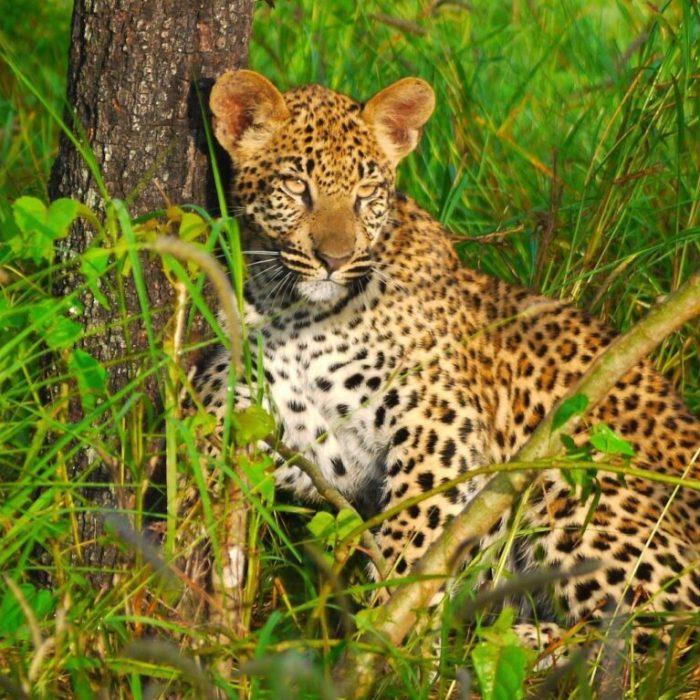 Oplev naturen i Botswana og Zambia