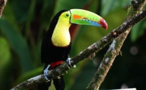 Tailor made trips to Costa Rica focusing on flora and fauna