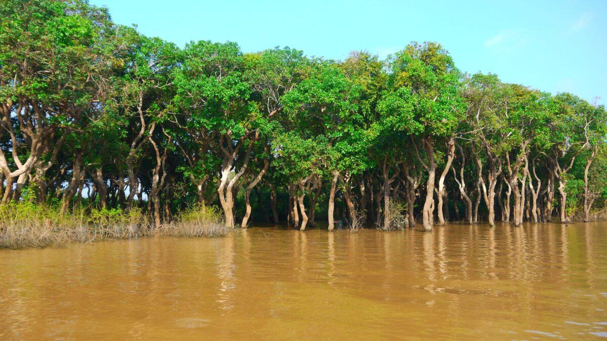 Tonle Sap søen i Cambodia