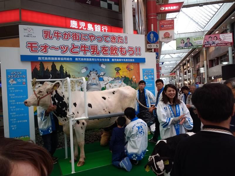 Cow Exhibition