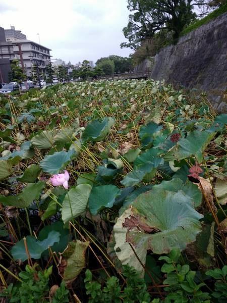 Ruins of Tsurumaru Castle walls