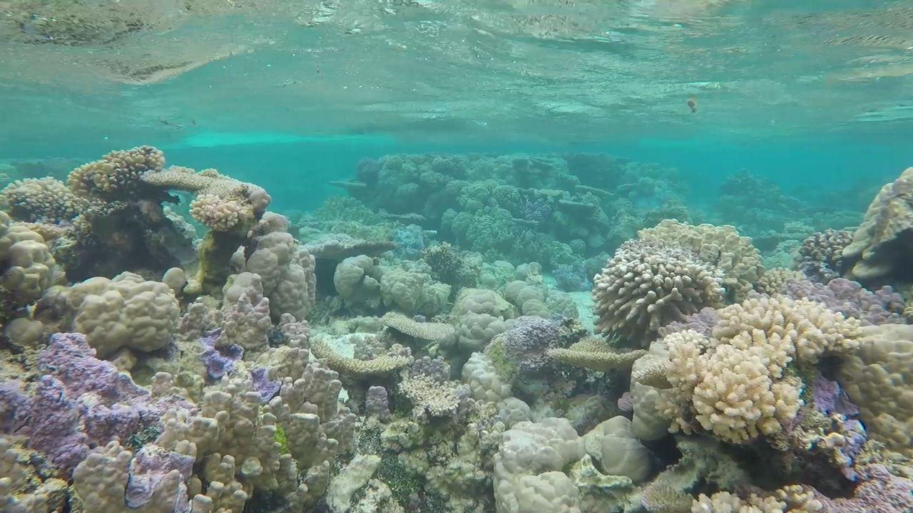 The stunning Coral Garden