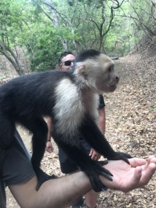 How to let the monkey hop on your arm