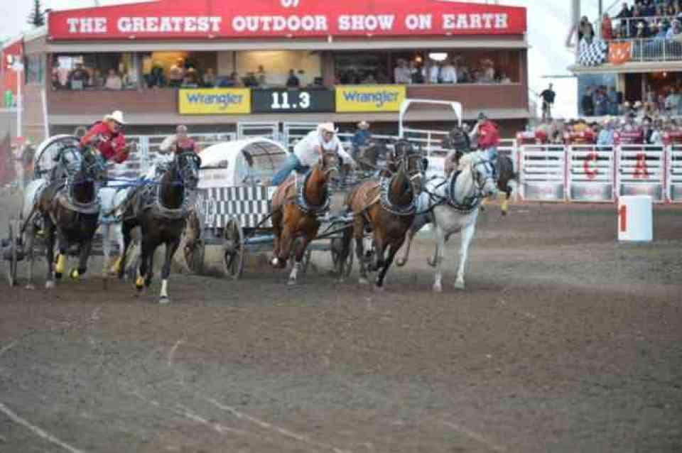 calgary stampede Chuckwagon Derby