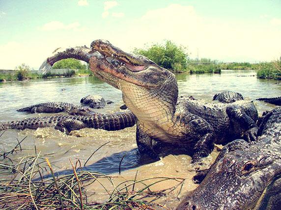 Monte Vista Gators Reptile Park